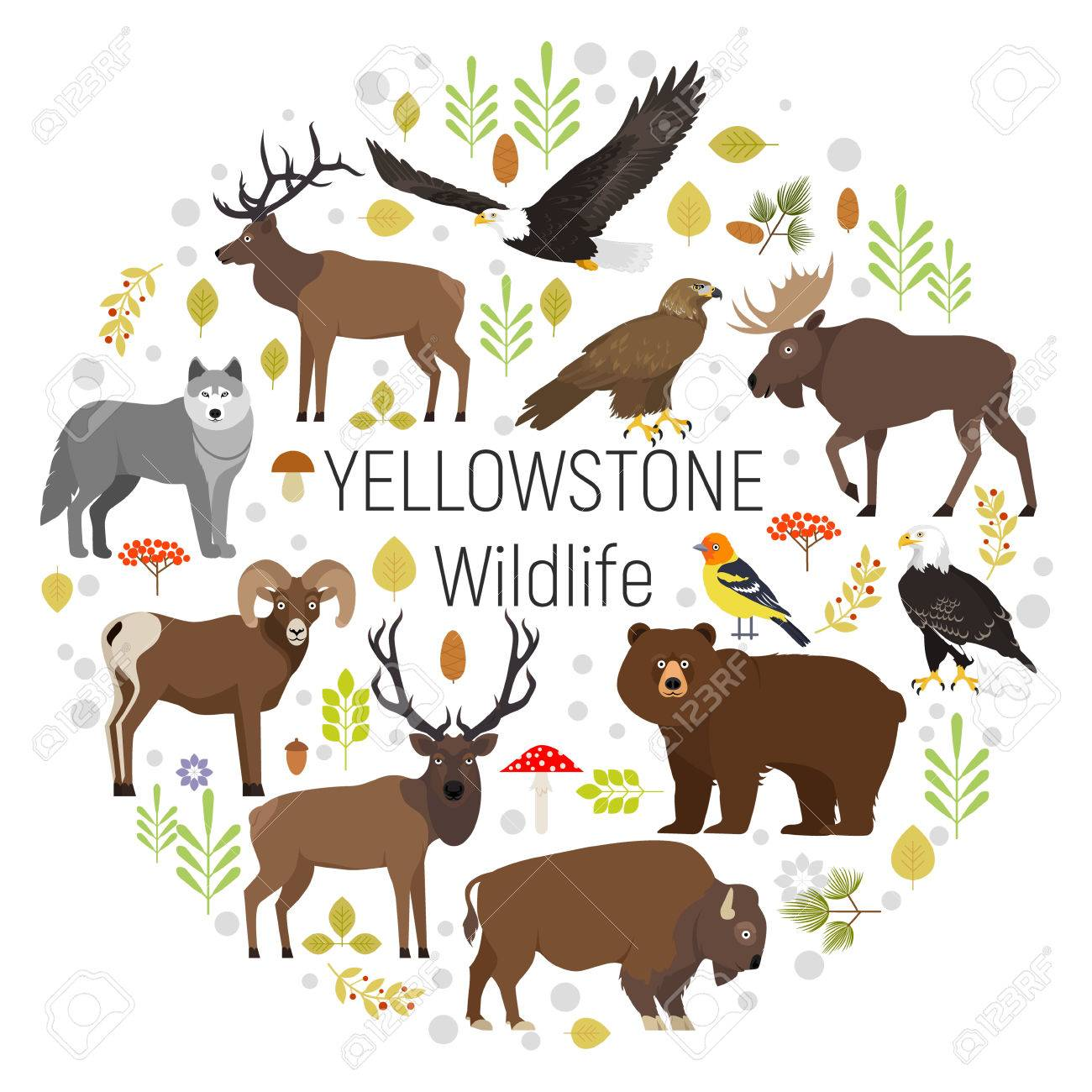 Circle Vector Set Of Plants And Yellowstone National Park Animals