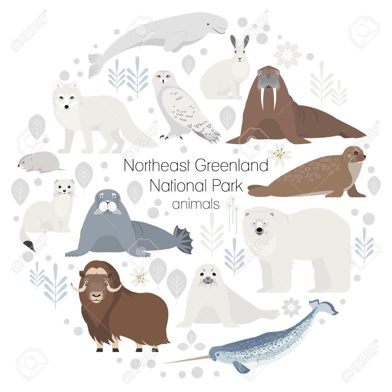 Los Animales Polares. Colección De Vector De Animales .Polar Oso ...