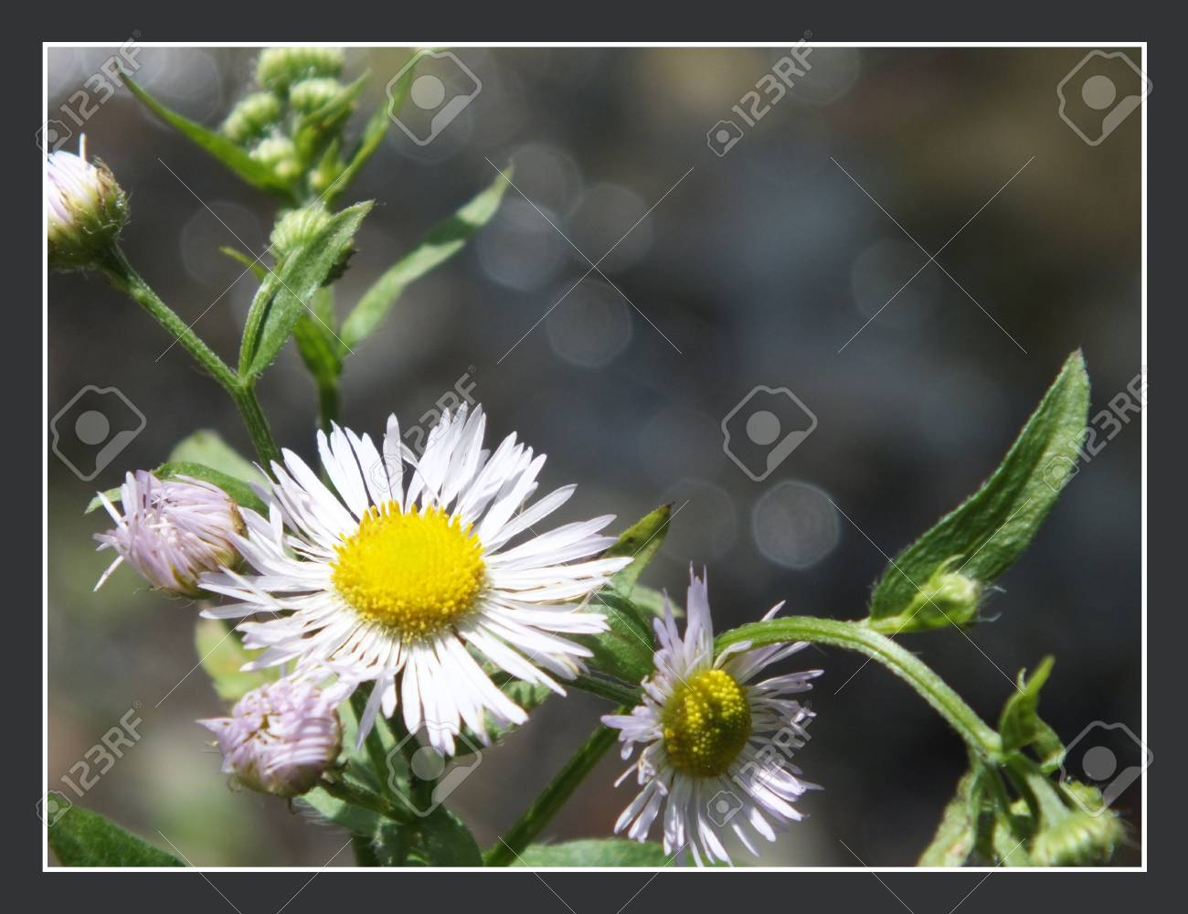 White flower in the forest with frame Stock Photo - 17354681