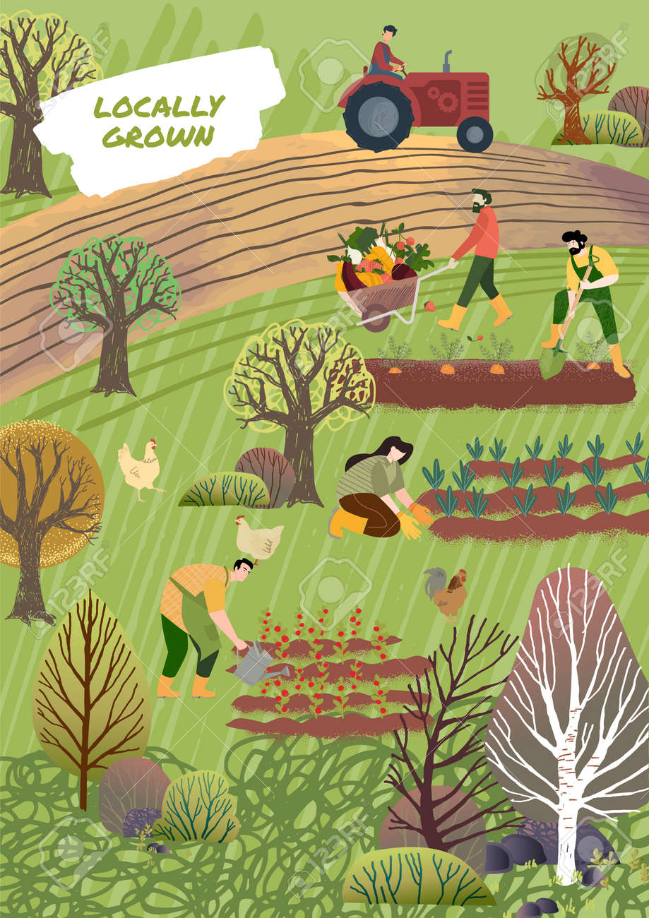 Organic farming, agriculture and gardening. Vector illustration for poster, brochure cover, background, business presentation, marketing material for food market and restaurants. - 171191653