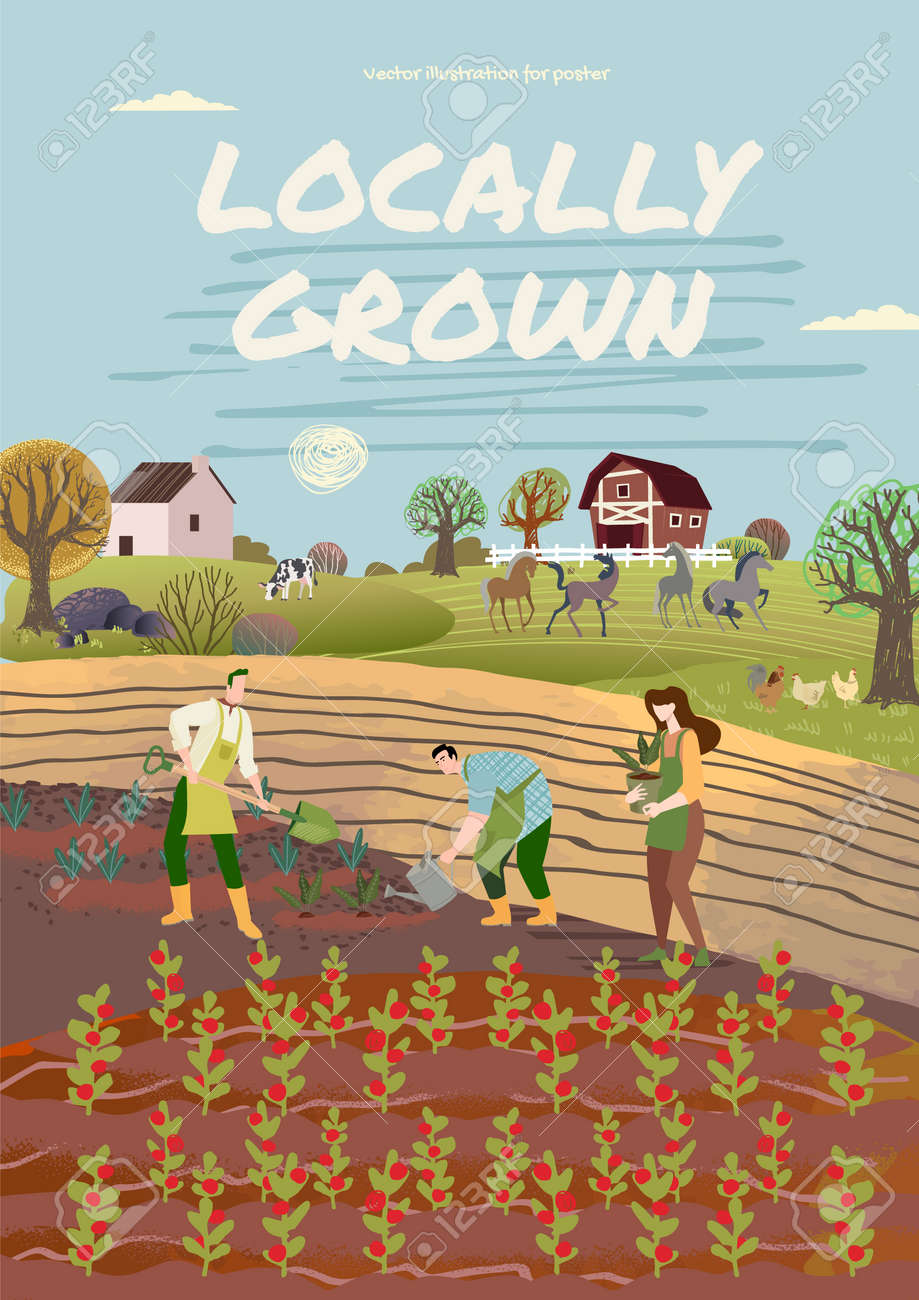 Organic farming, agriculture and gardening. Vector illustration for poster, brochure cover, background, business presentation, marketing material for food market and restaurants. - 170939266