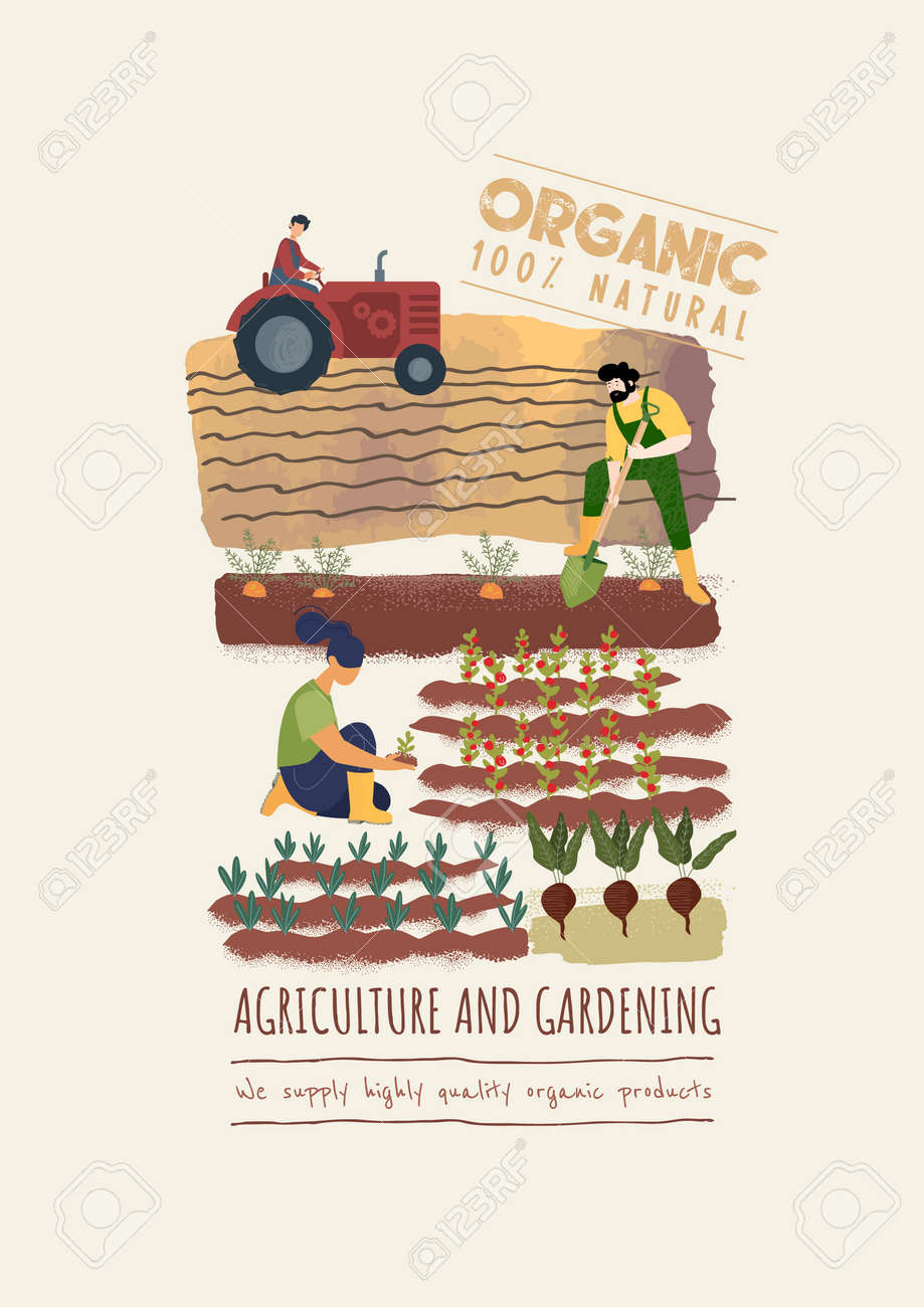 Organic farming, agriculture and gardening. Vector illustration for poster, brochure cover, background, business presentation, marketing material for food market and restaurants. - 170939445