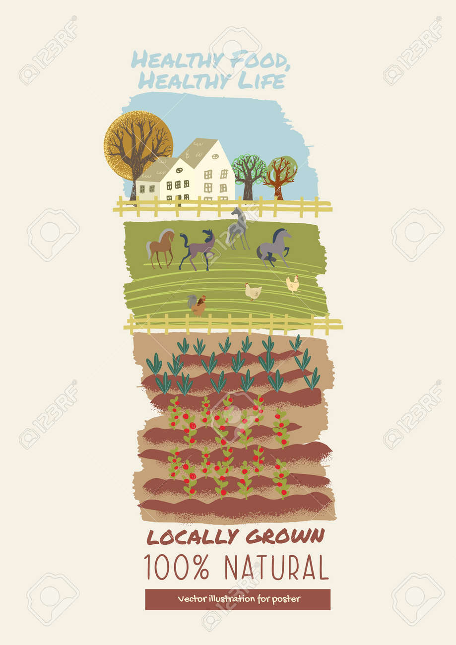 Organic farming, agriculture and gardening. Vector illustration for poster, brochure cover, background, business presentation, marketing material for food market and restaurants. - 170943589