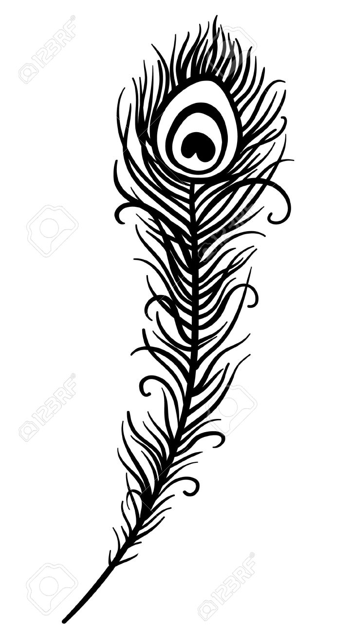 6,144 Peacock Feather Stock Vector Illustration And Royalty Free ...
