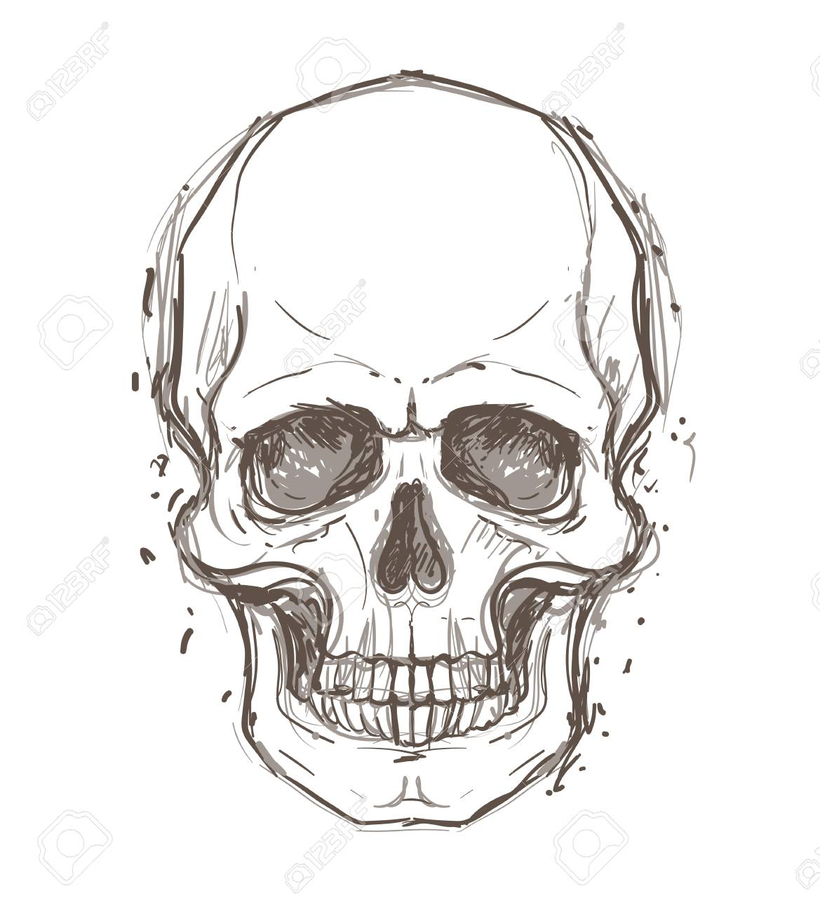 Sketchy Style Drawing Of Human Skull Human Head Isolated On Royalty Free Cliparts Vectors And Stock Illustration Image 87434602