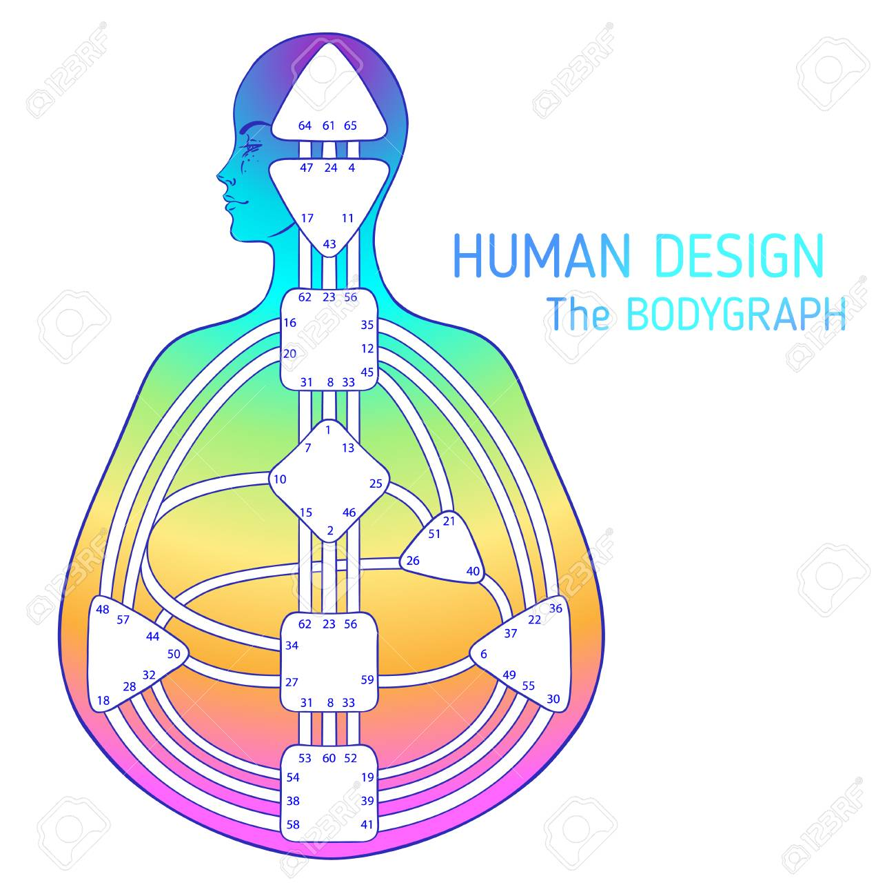 Human Design Bodygraph Chart Design Vector Isolated Illustration Royalty Free Cliparts Vectors And Stock Illustration Image 110332287