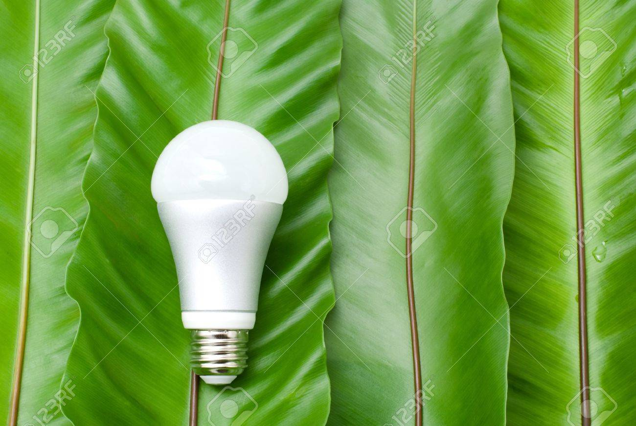 LED light bulb on the green fern leaves Stock Photo - 12329224