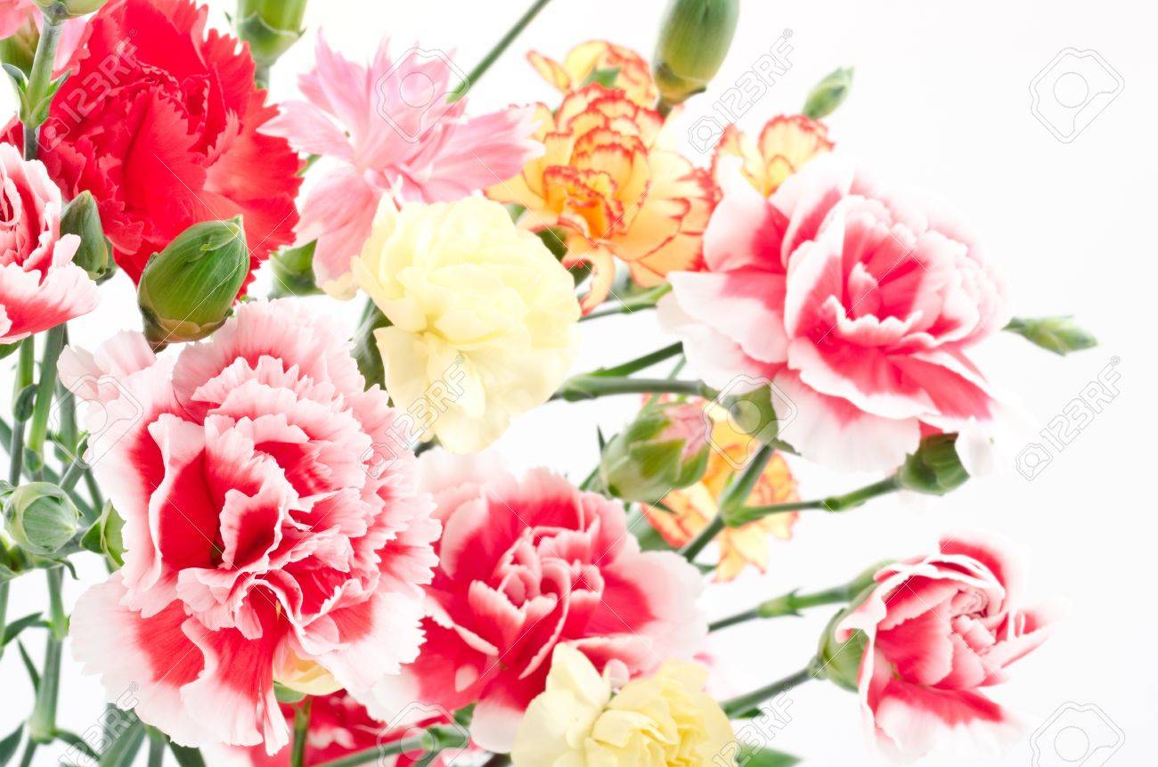 White Wedding Flowers Types Images Flower Decoration Design Stunning Of For Weddings Ideas