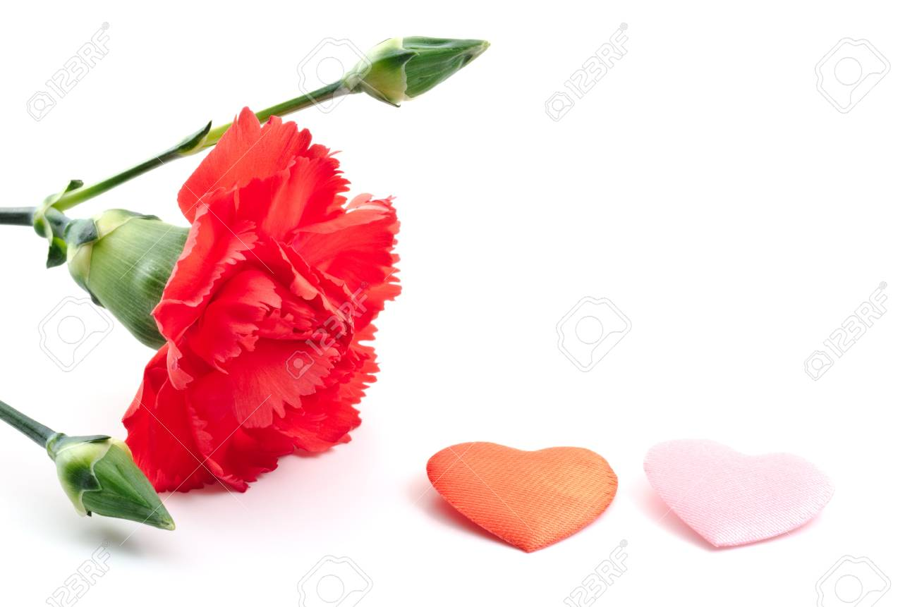 Red carnation and two heart shaped objects on white background Stock Photo - 13241492
