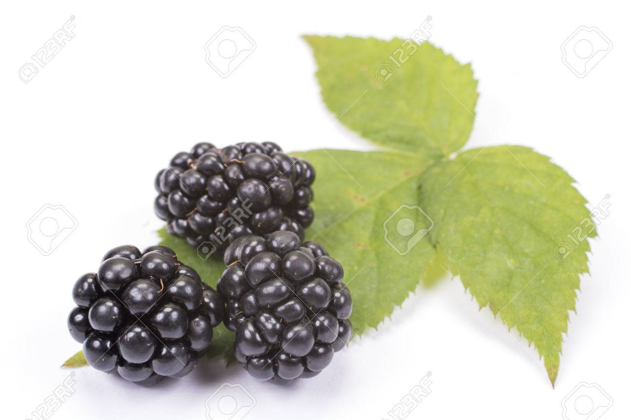 Indian Blackberry Fruit Images