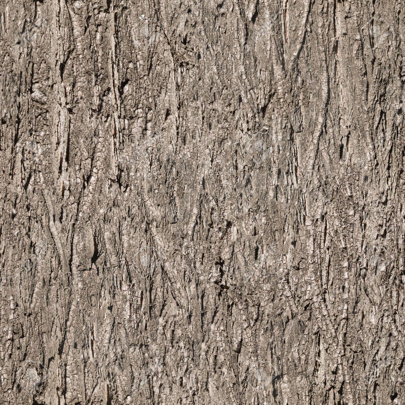 seamless bark tree texture - 34293697