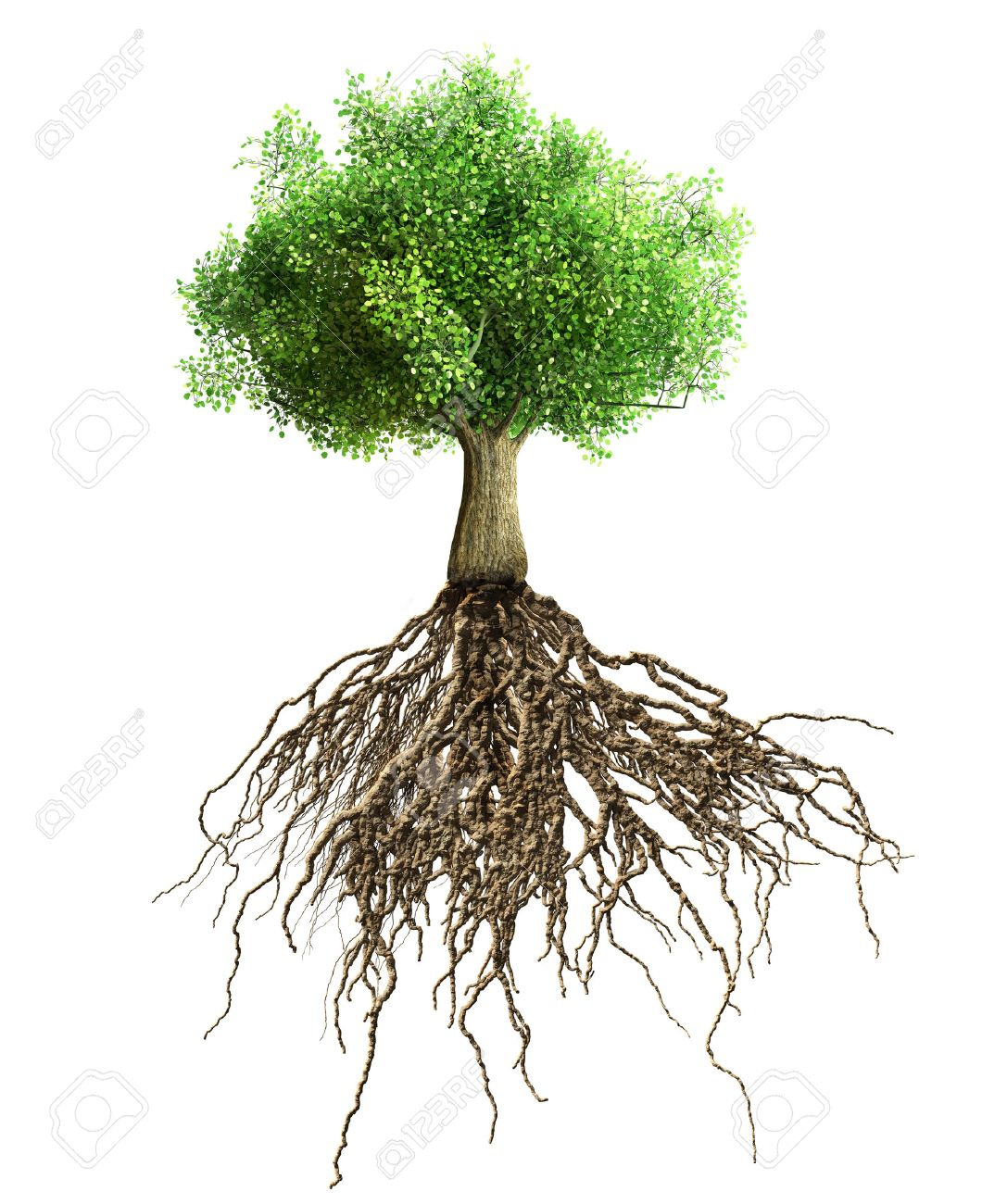 tree with roots isolated - 34293707