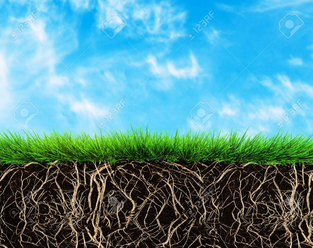 grass with roots and soil - 35362494
