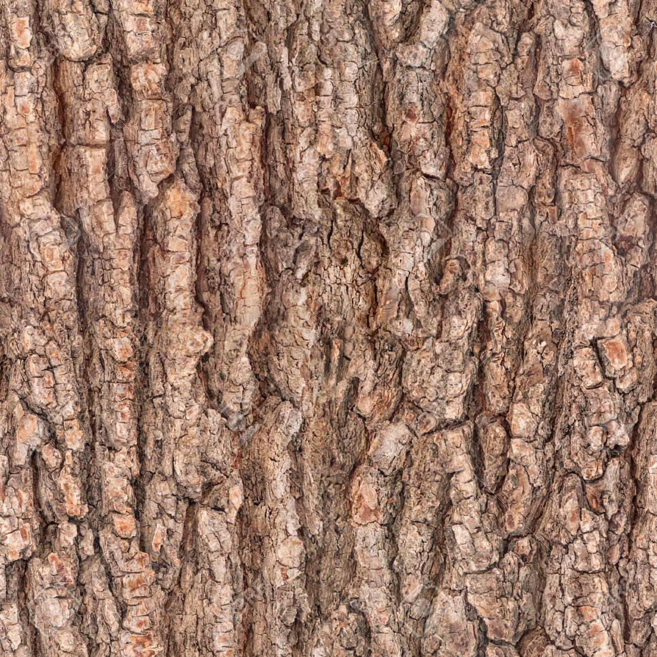 seamless bark tree texture - 35362760
