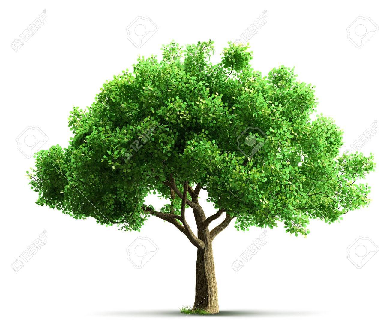 tree isolated - 40192467