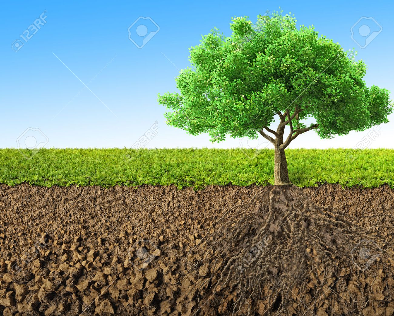 tree with roots 3D rendering - 45586810