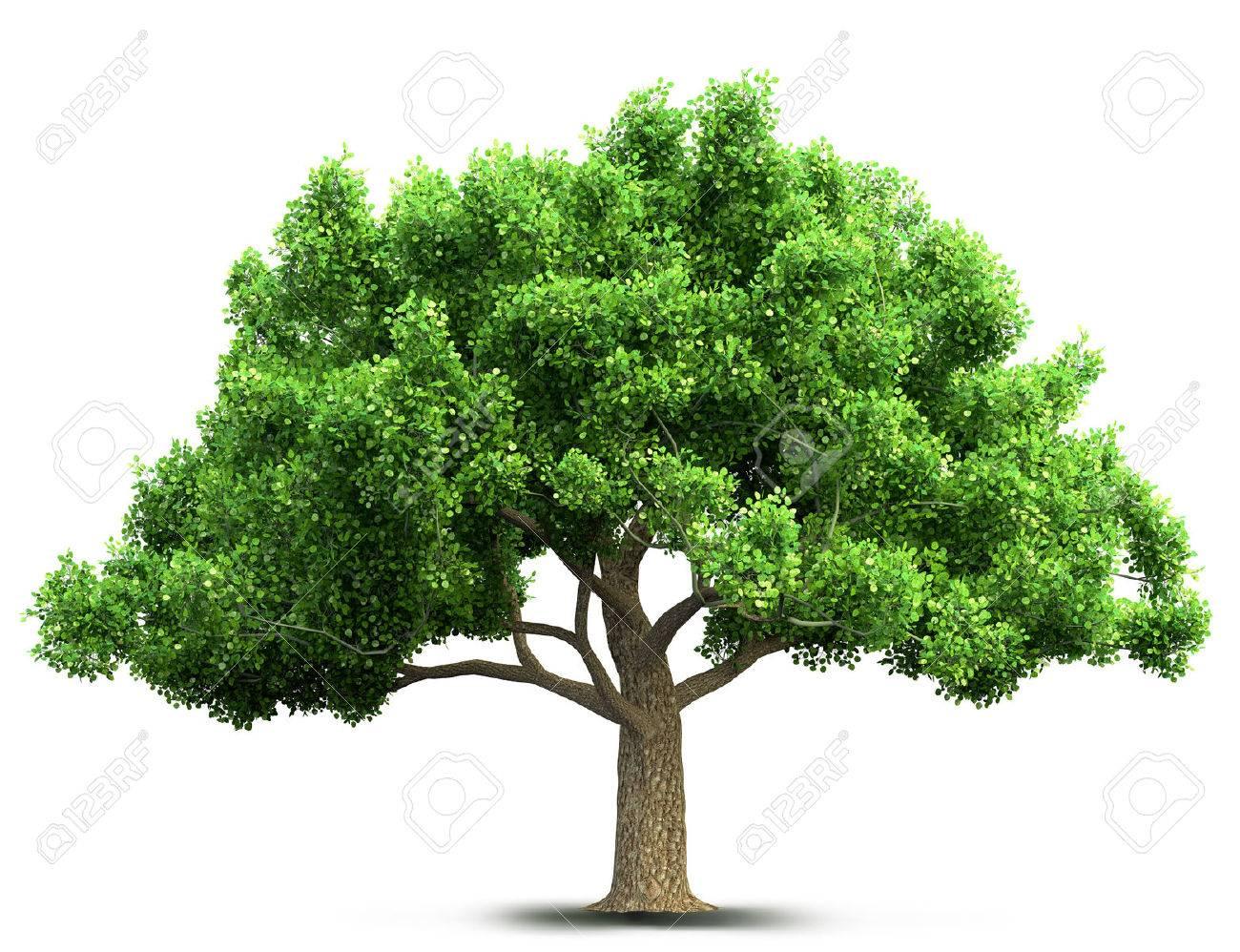 tree isolated 3D illustration - 64831972