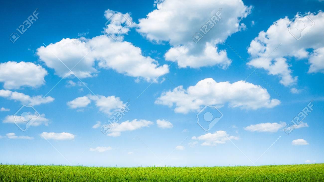 blue sky and summer green field landscape - 72510658
