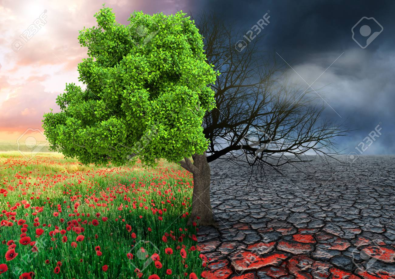 ecological concept with tree and climate changing landscape - 114586501