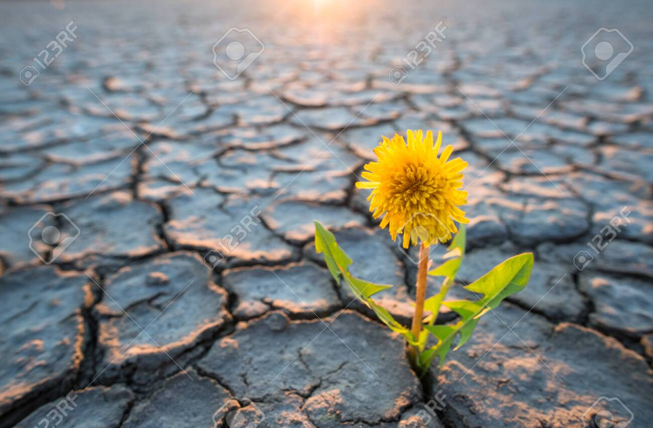 plant growing in desert drought concept - 124135967