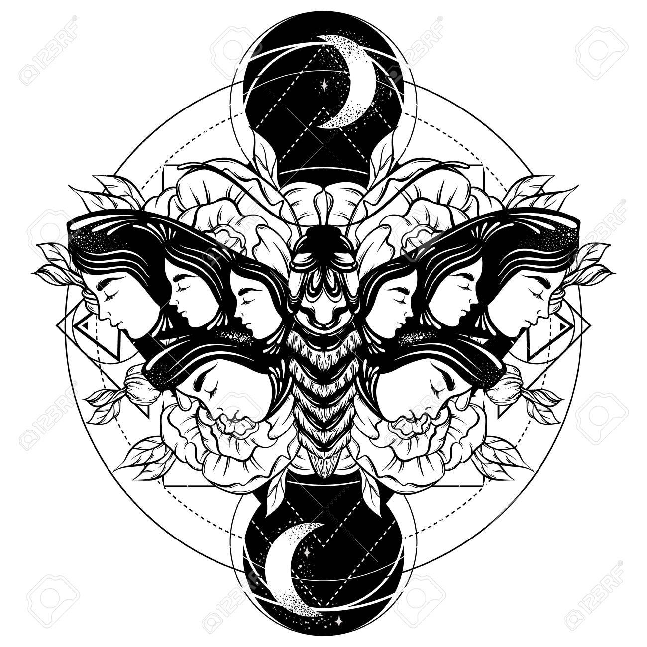 Vector Illustration Dessinee A La Main De Papillon De Nuit Avec Des