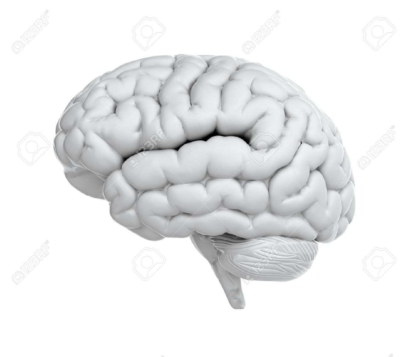 3d Render Of Brain On White Background Stock Photo, Picture And ...
