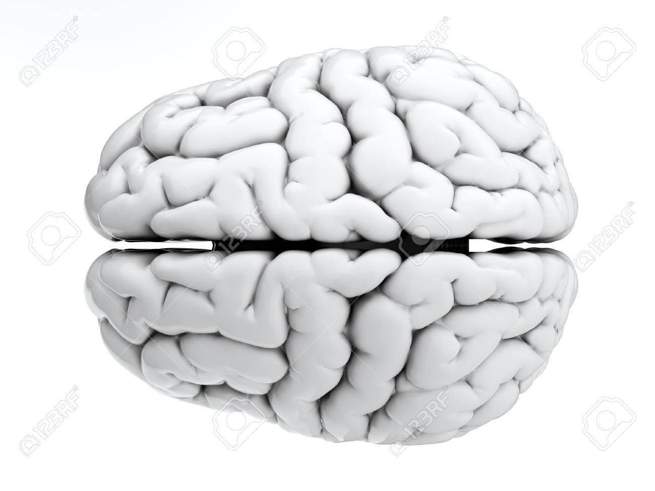 Fein 3 D Anatomie Des Gehirns Galerie - Menschliche Anatomie Bilder ...