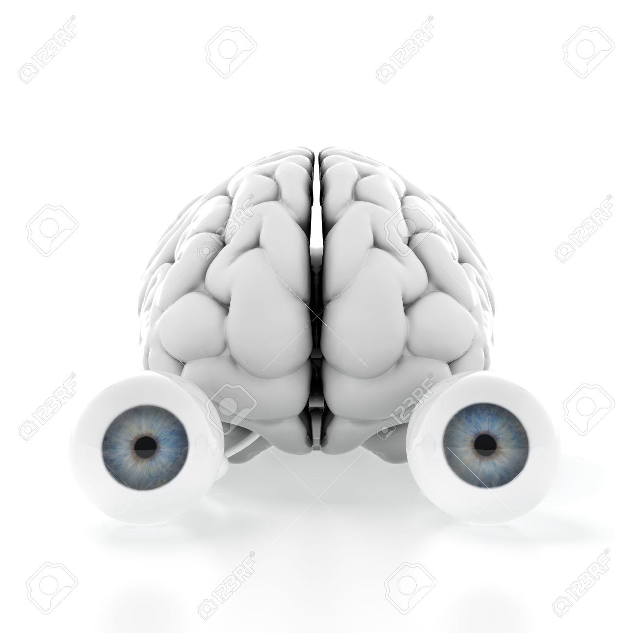 3D-Darstellung Von Gehirn Mit Den Augen Auf Weißem Hintergrund ...