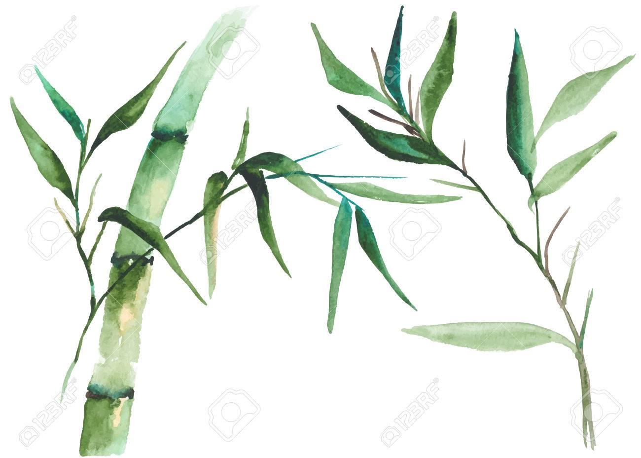 Watercolor bamboo illustration - 82678249