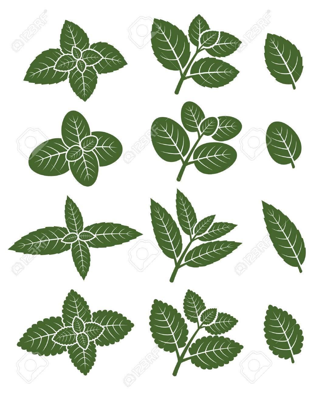 Mint leaves set. - 33001252