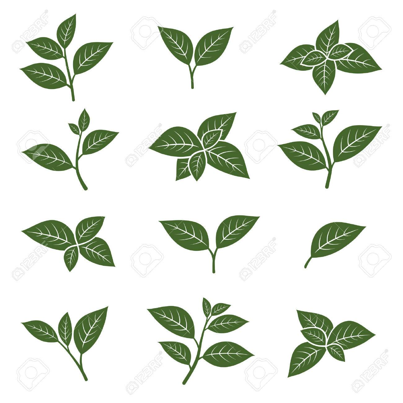 Green tea leaf collection set. Vector - 40172650