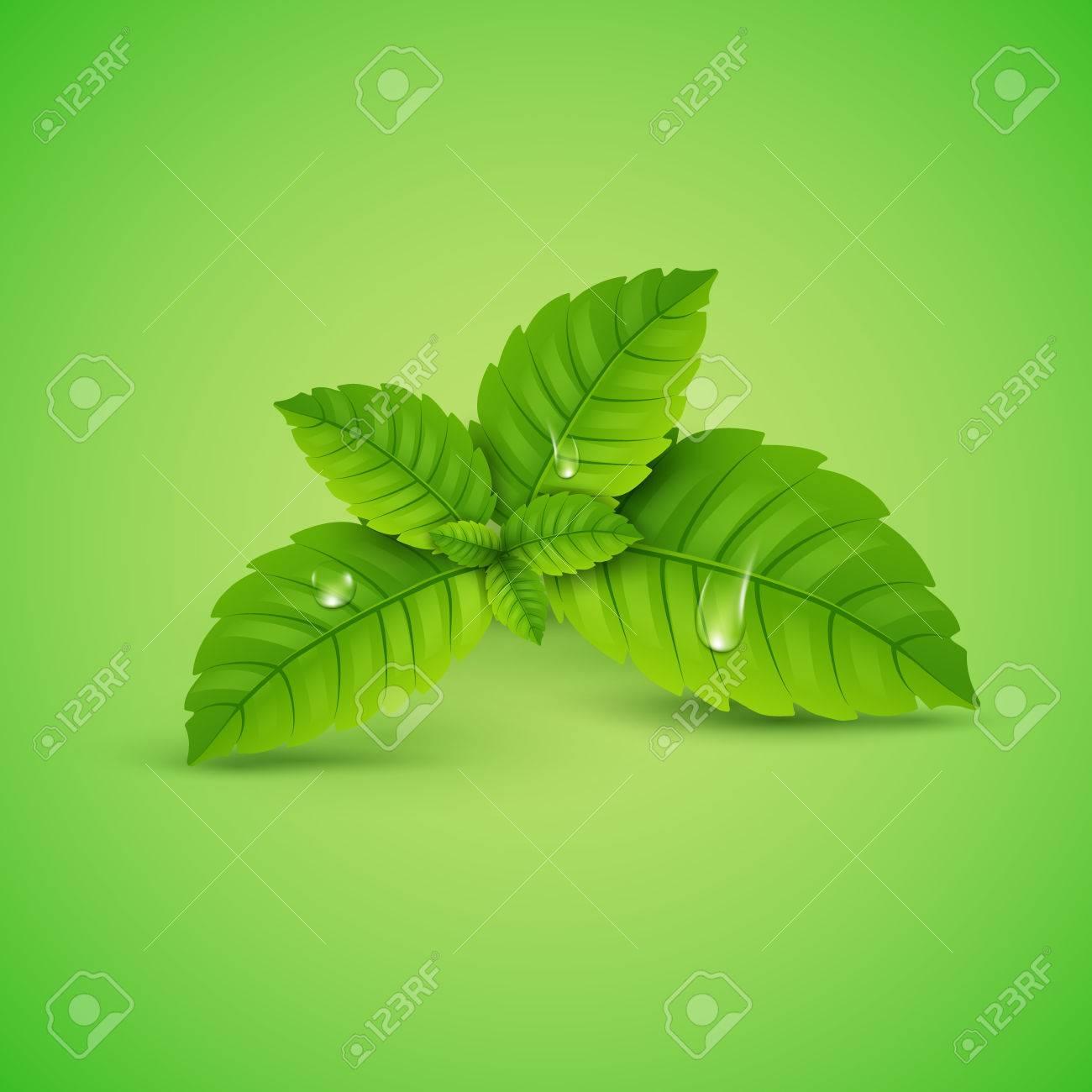 feuille de menthe fraiche. arôme sain de menthol vectoriel. plante