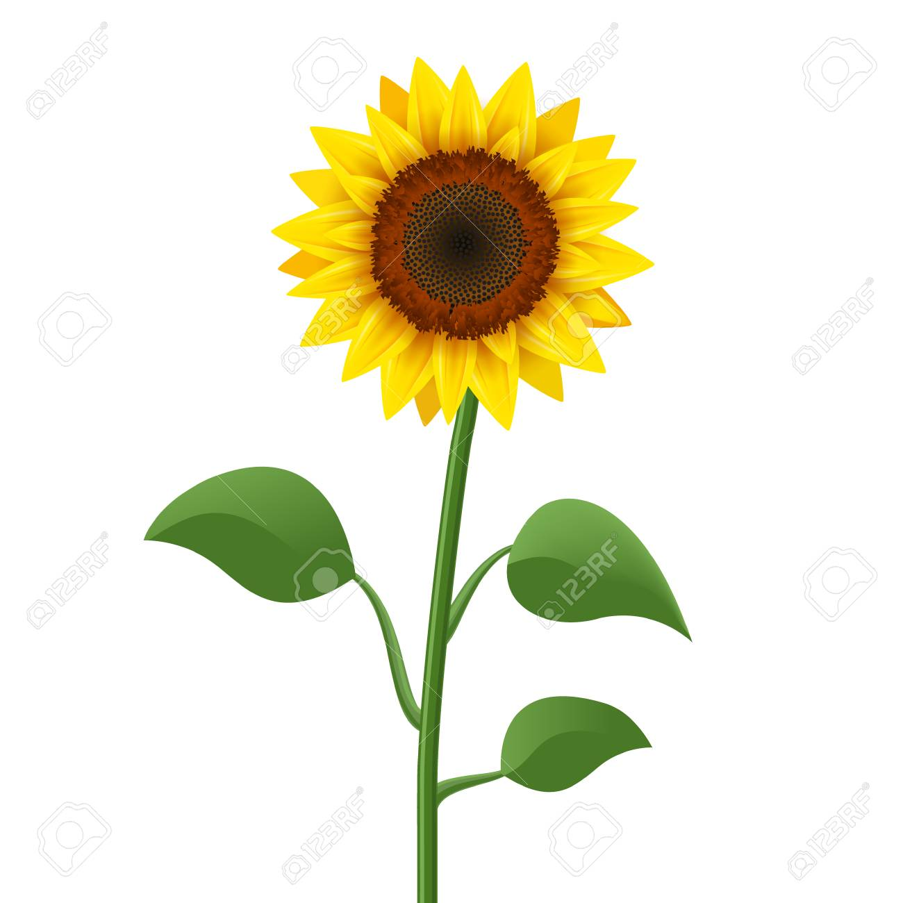Sunflower Realistic Icon Vector Isolated Yellow Sunflower Blossom Royalty Free Cliparts Vectors And Stock Illustration Image 102589097