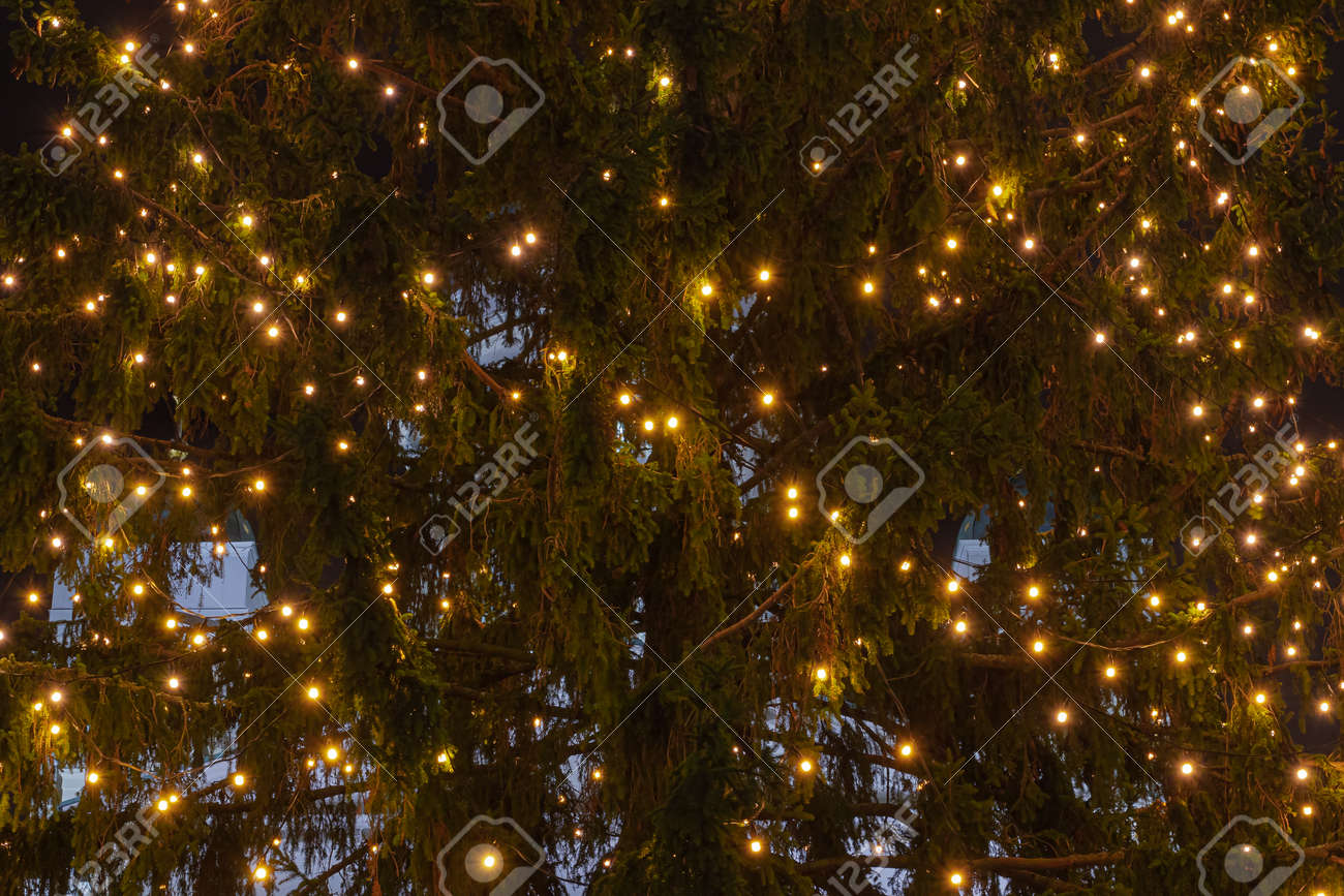 Christmas tree lights on the Christmas tree. The concept of congratulations and meeting the new year. High quality photo - 159536053