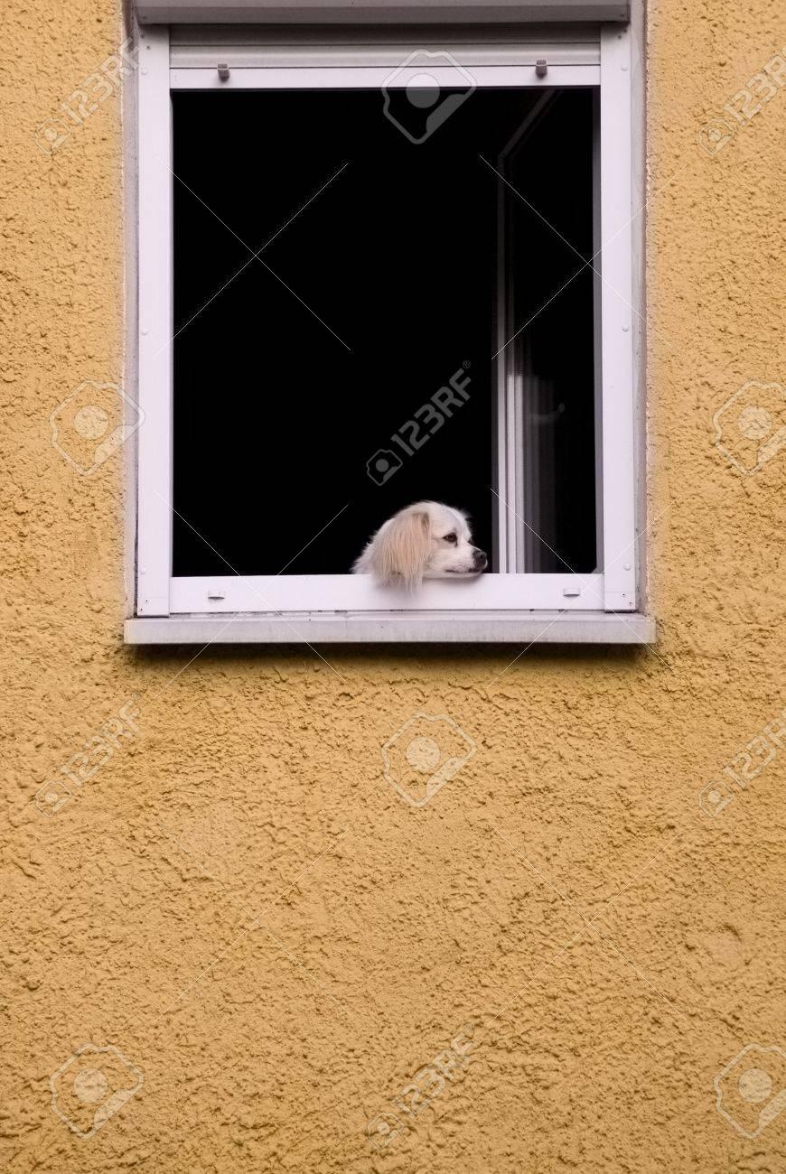 Perro En La Ventana Aburrida Mirar En La Calle En Un Aburrimiento