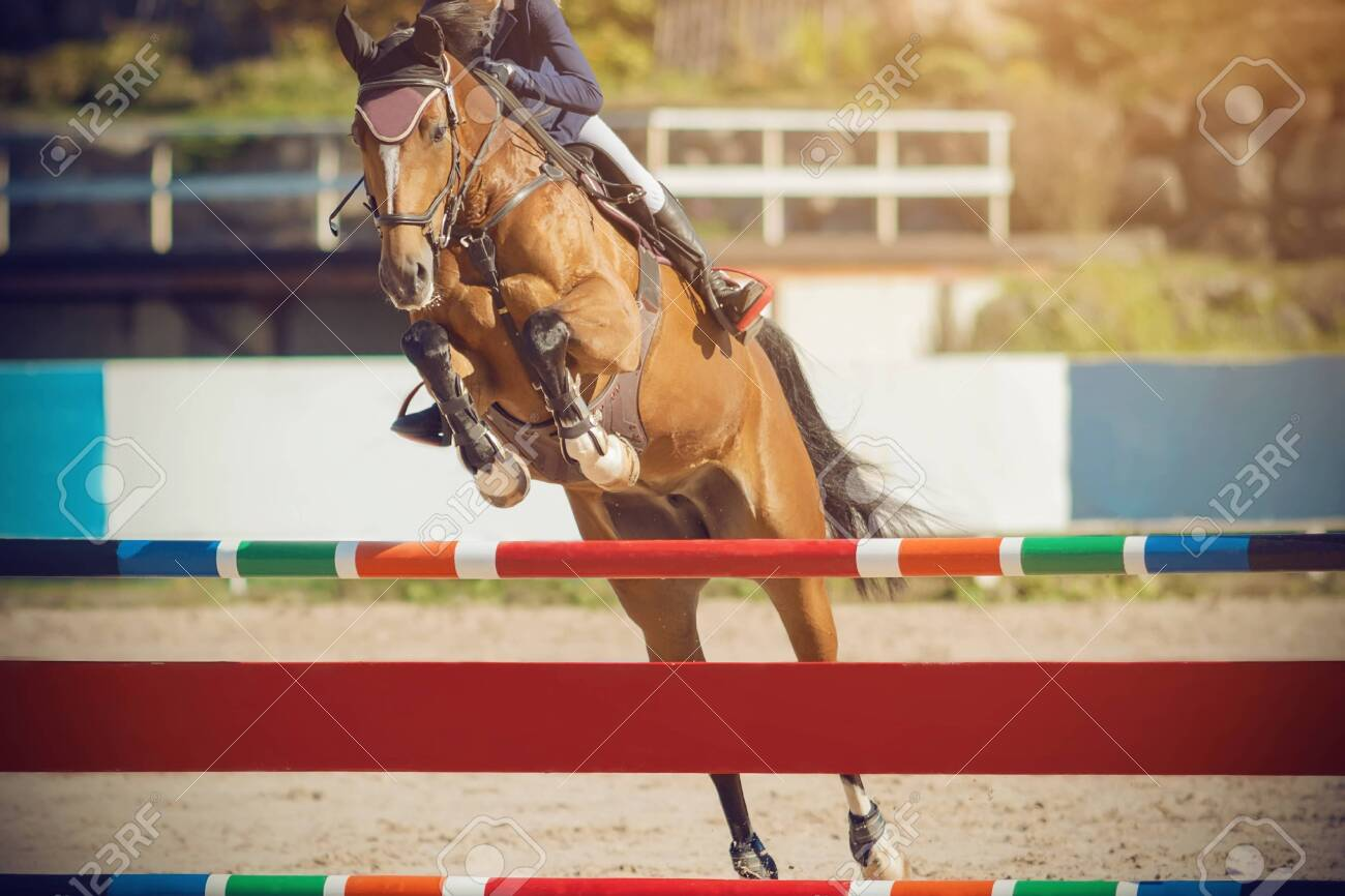 An elegant Bay horse with a rider in the saddle jumps over a high multi-colored barrier on a Sunny day on a show jumping. - 130507049