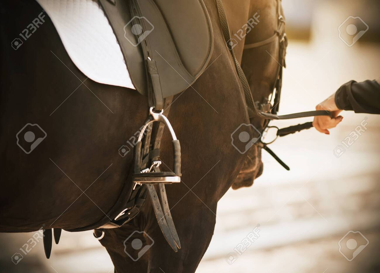 On A Sunny Day On A Dark Bay Horse Wearing A Ammunition For Competition Stock Photo Picture And Royalty Free Image Image 131619224