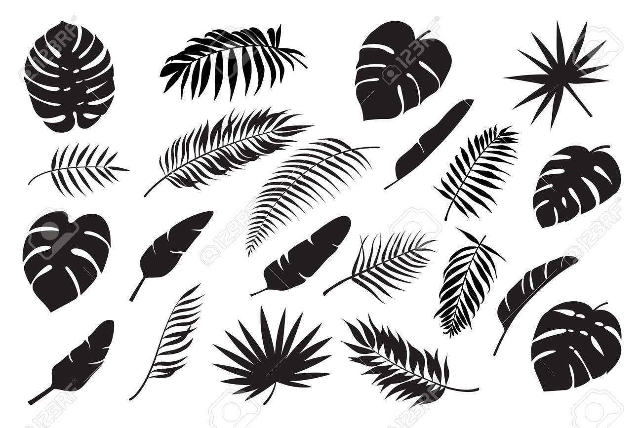 Palm leaves silhouettes. Tropical leaf monstera, banana and coconut. Jungle foliage, exotic rainforest palm tree floral decoration vector set. Paradise branches and leafage for summertime - 169018511