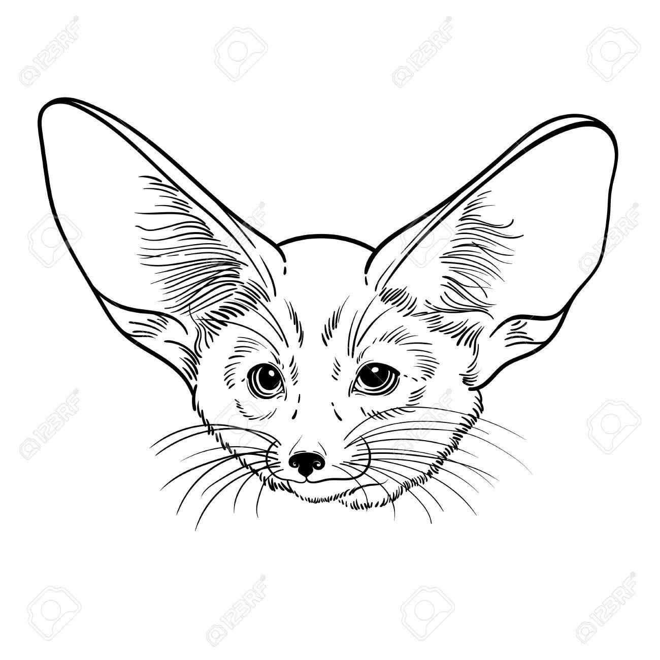 Lindo Animal Pequeño Zorro Fennec. Ilustración Linear De Los Niños ...