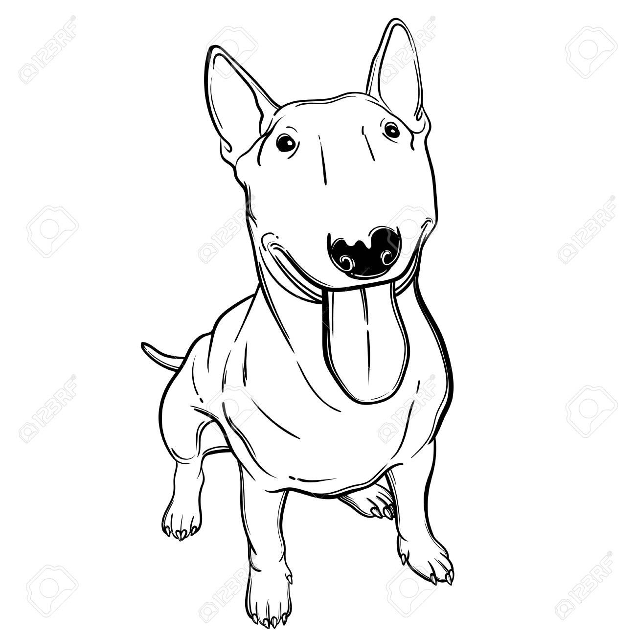 Cute Ilustración Vectorial Con Bullterrier. Perro De Casa Perfecto ...