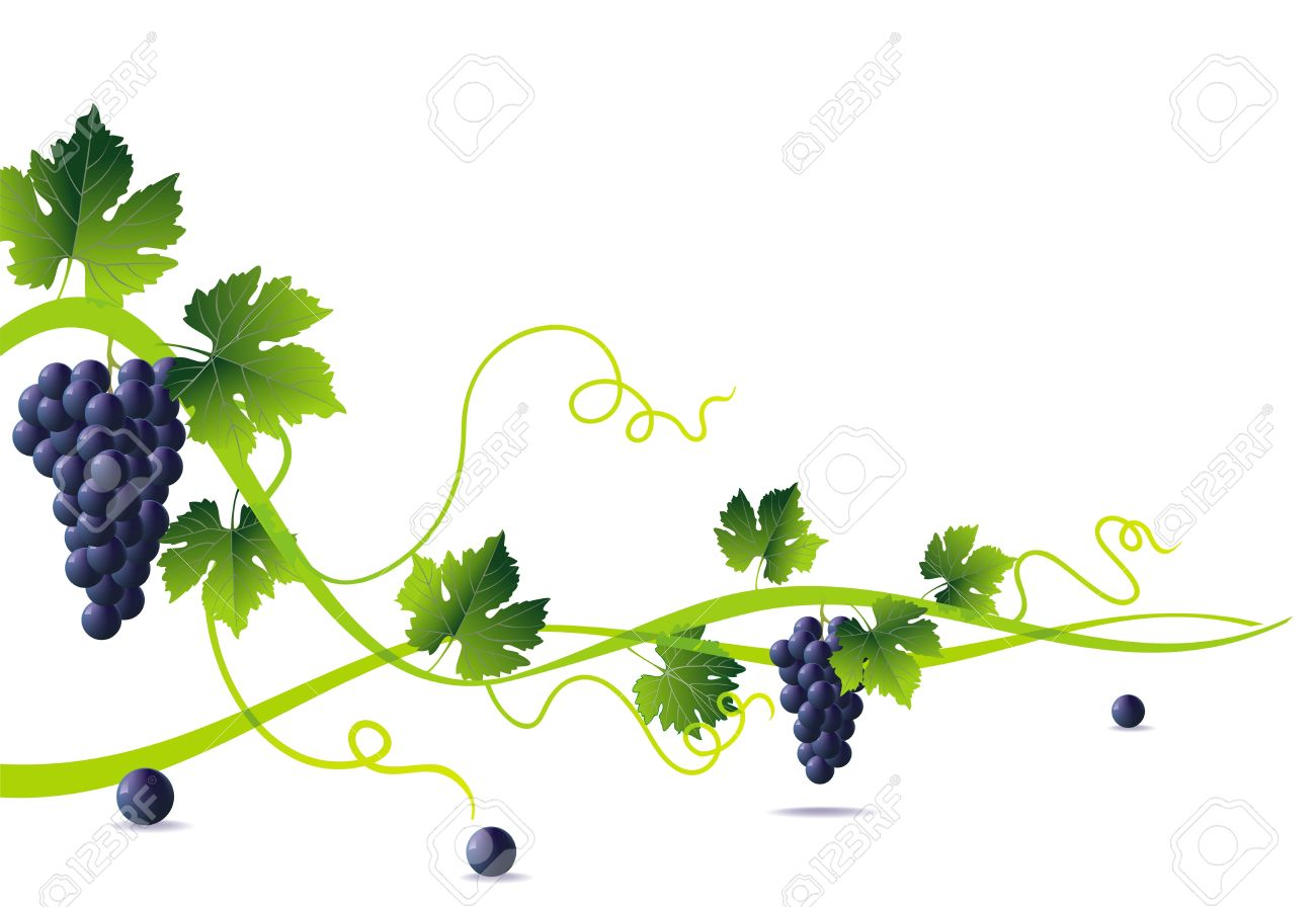 anstract green liana and bunch of blue grapes with green leaves Stock Vector - 10471904