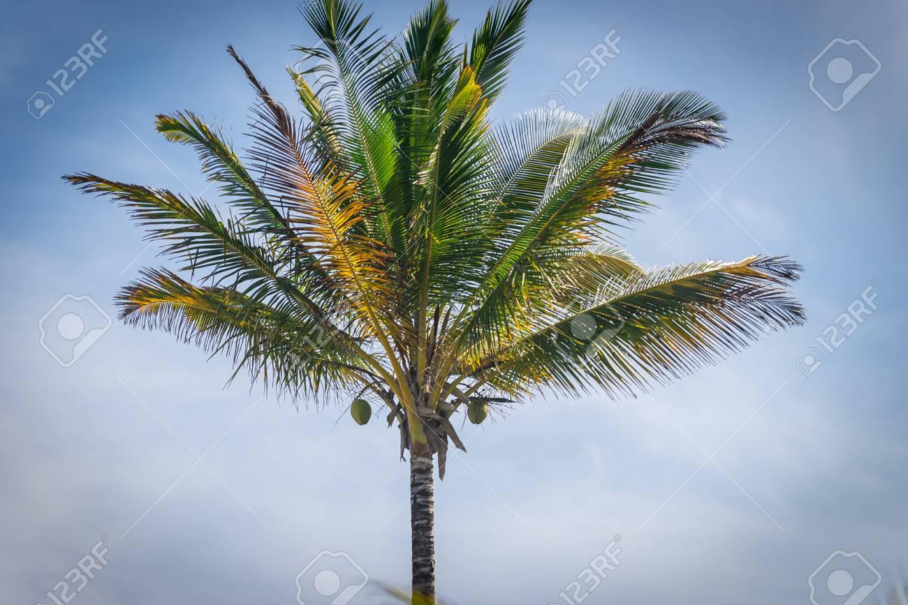 palmier vu de haut