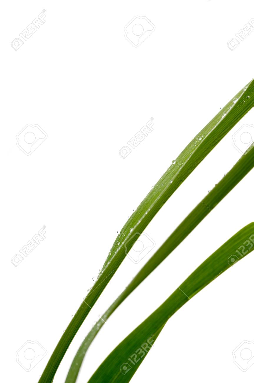Blades of grass in morning dew on white Stock Photo - 6722337