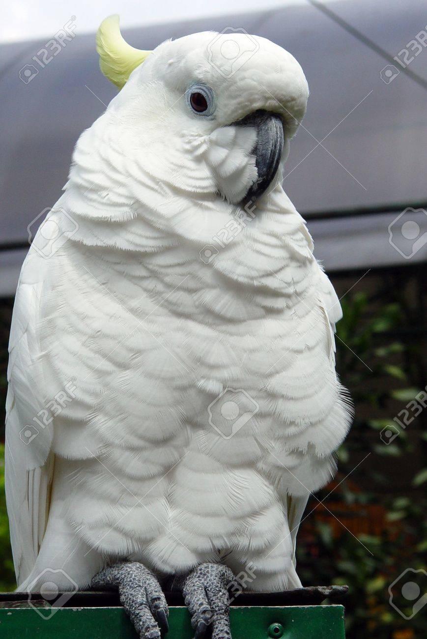 Ara parrot Stock Photo - 698516
