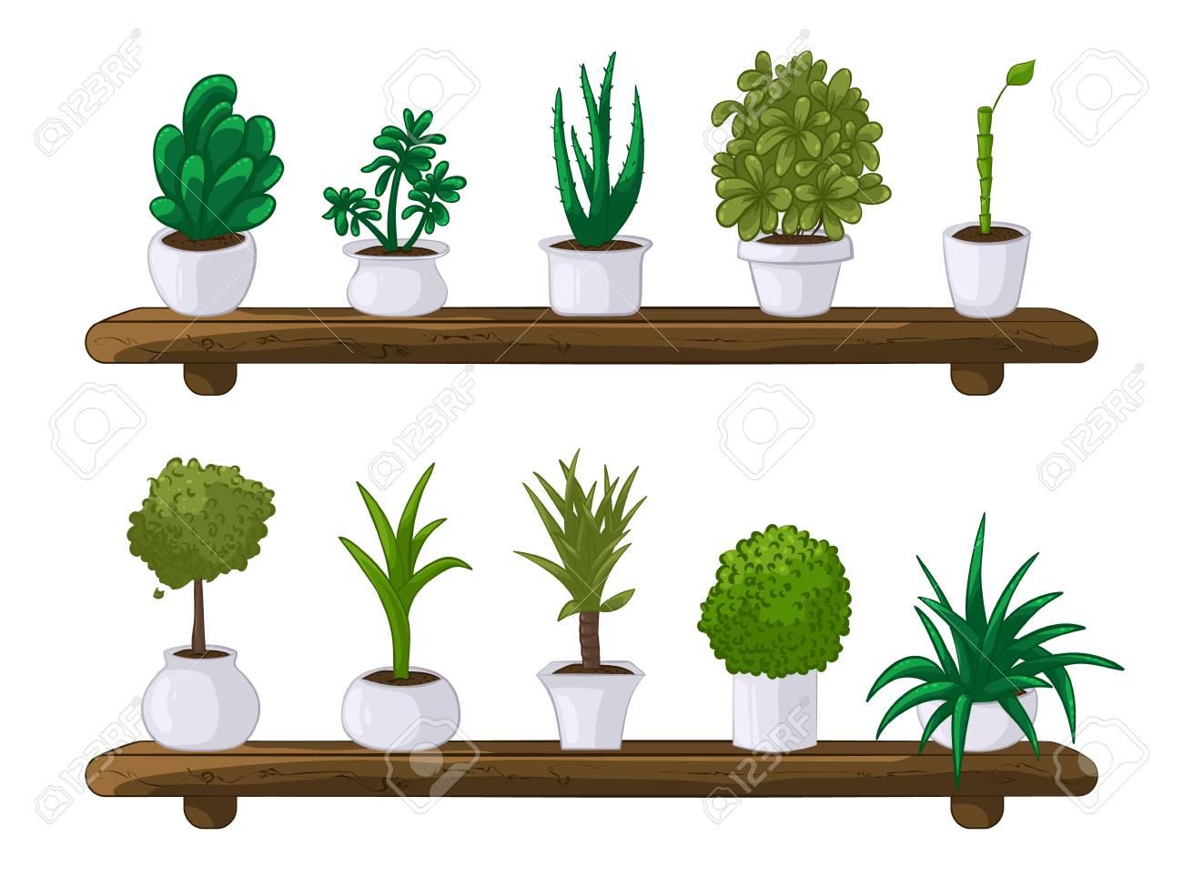 木製の棚に白い背景の鉢に観葉植物のセットのベクトル イラストの