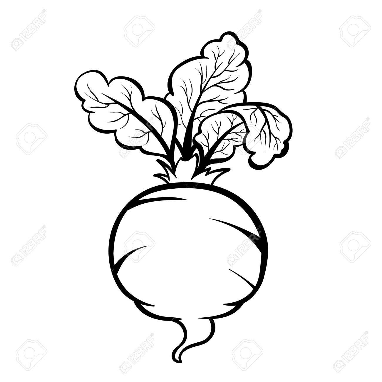 Vector Hand Drawn Illustration Of A Beet Outline Doodle Icon