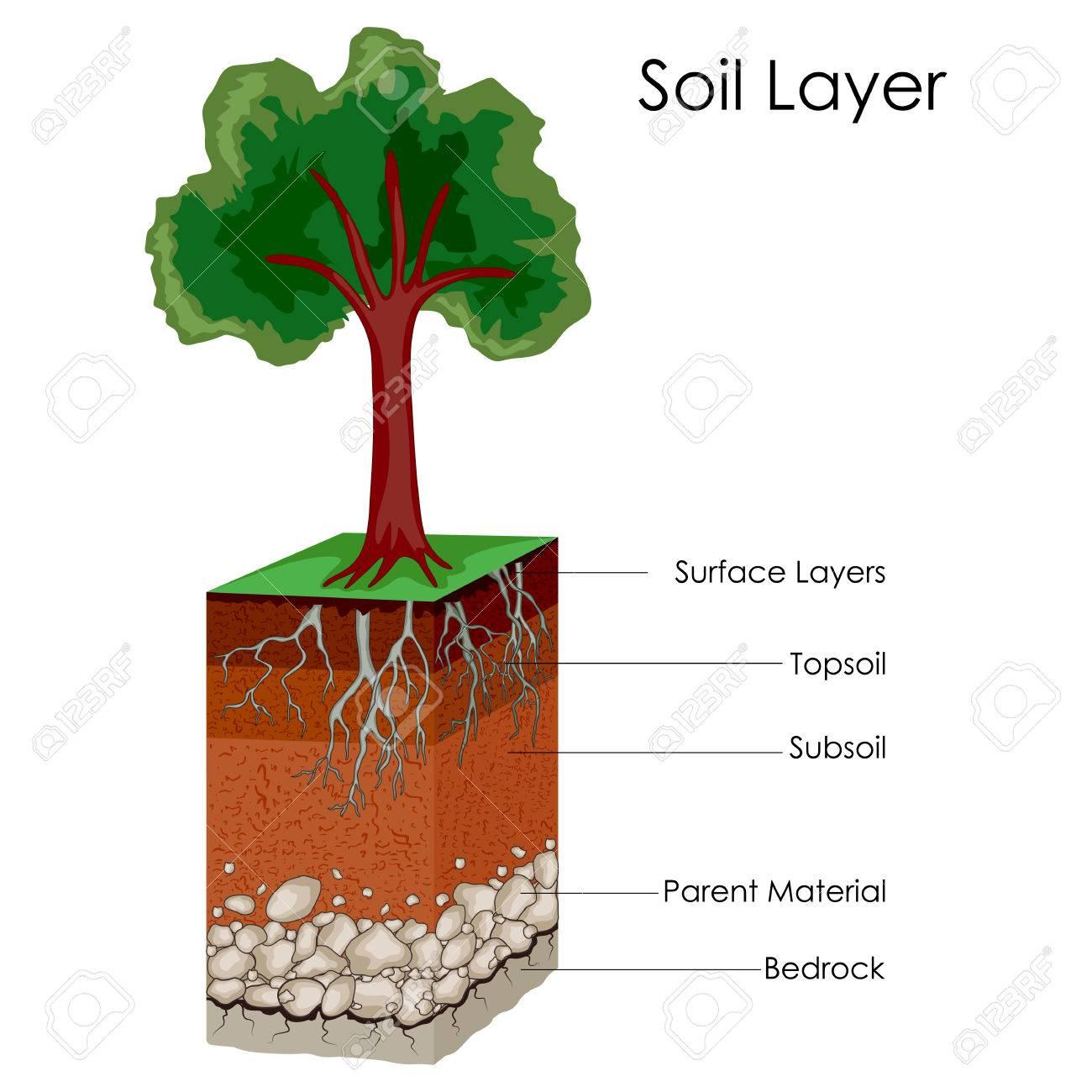 Soil Flower Diagram - Wiring Circuit •