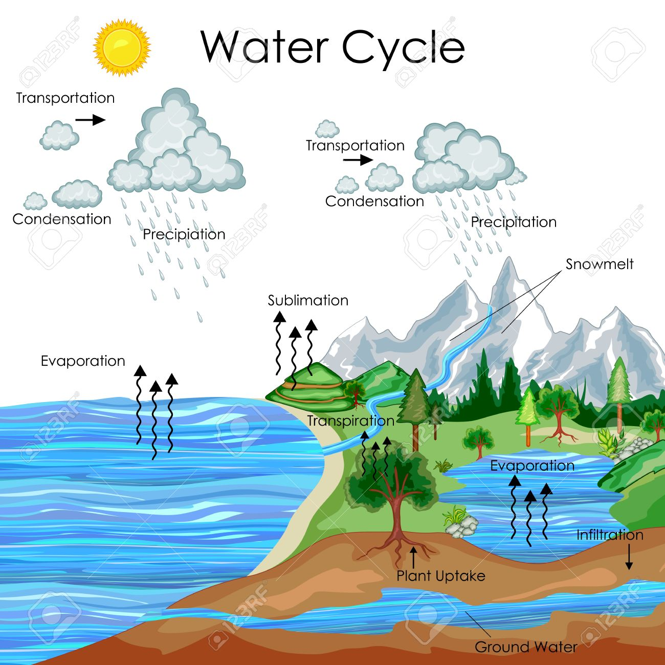 education chart of water cycle diagram royalty free cliparts Evaporation Precipitation Runoff education chart of water cycle diagram stock vector 80714981