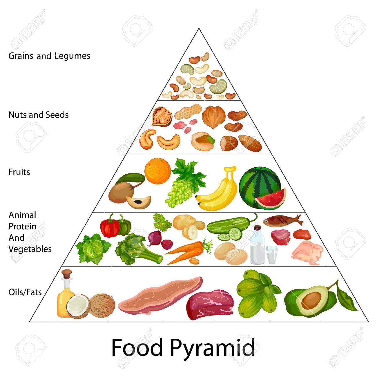 Education Chart Of Food Pyramid Diagram Stock Vector
