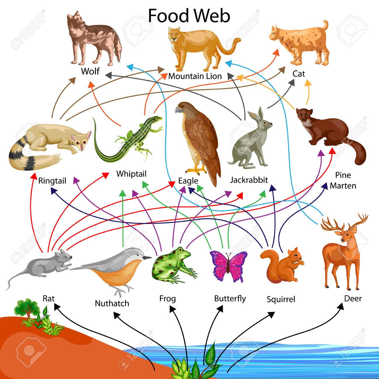 education chart of biology for food web diagram royalty freeeducation chart of biology for food web diagram stock vector 80714978